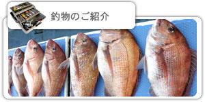 釣物のご紹介