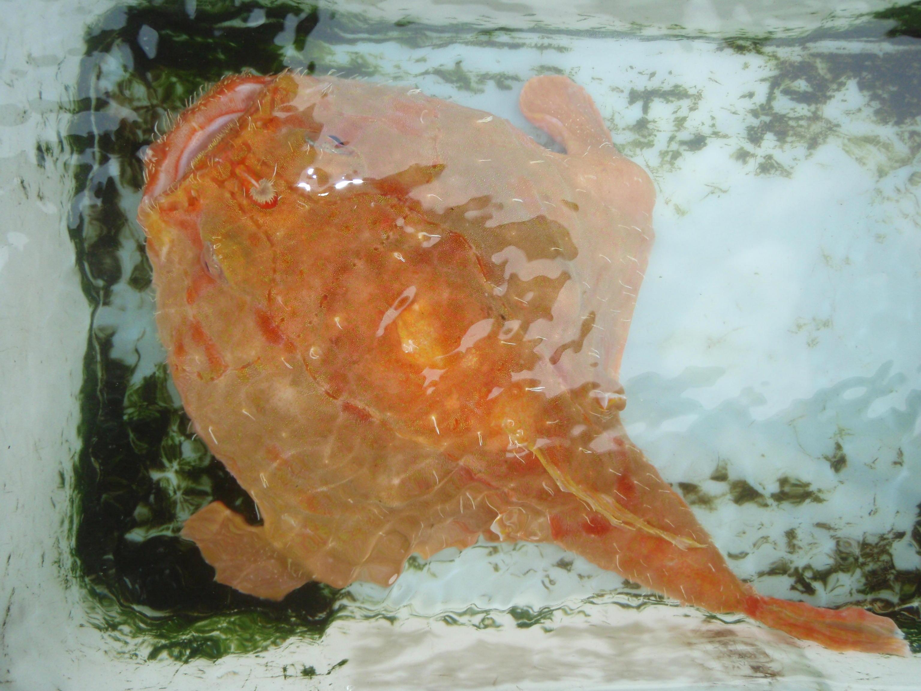 写真:珍魚図鑑